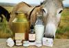 Laptele de Măgărița: Beneficii și indicații de consum
